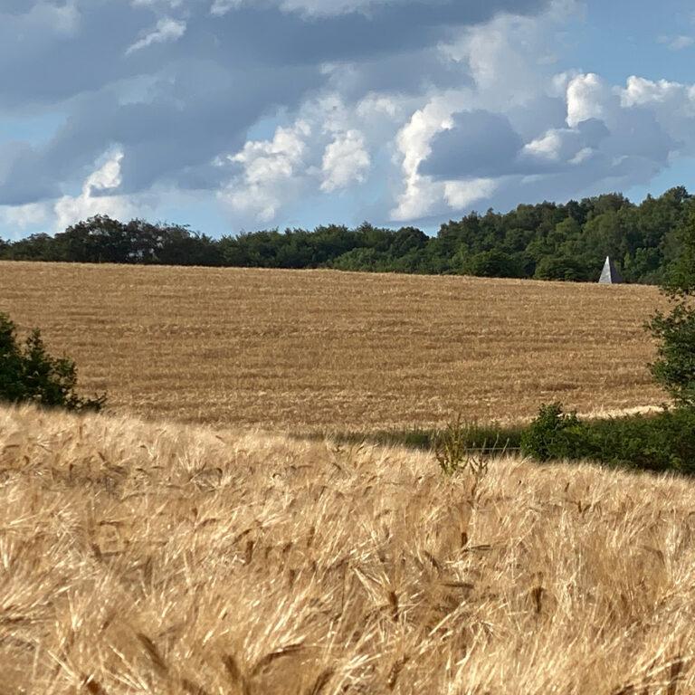 Felder-in-der-Umgebung