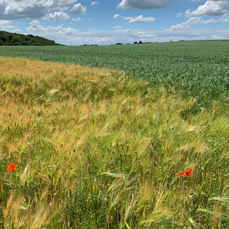 Felder-neben-dem-Grundstück
