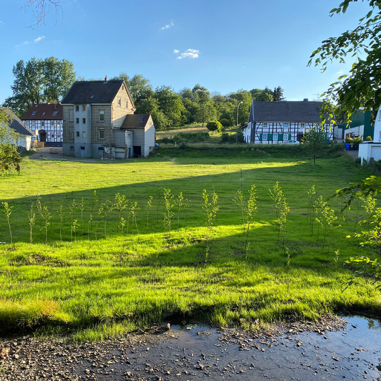 Koxhof-im-Sommer-1